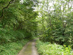 森林セラピーロード(柳ケ平散策路「命の洗濯場」)